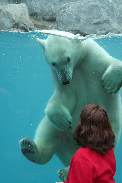 """Encounter with a Polar Bear"" by Aramisse"