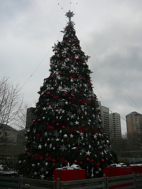 """2008 Christmas Tree in Nathan Phillips Square in Toronto"" image by stevevharris (Steve Harris) in Flickr"