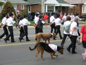 """EMS Dogs and EMS Workers in the Canada Day Parade"" image (c) by Mike DeHaan"