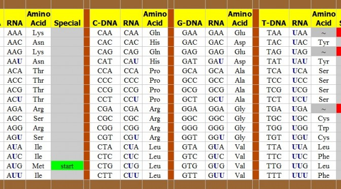 The Genetic Code from DNA to RNA to Amino AcidsThe Genetic Code from DNA to RNA to Amino Acids copyright Mike DeHaan