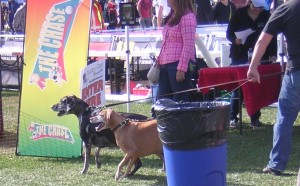 """Two Dogs are Next in Line for the 2015 Woofstock Lure Obstacle Course"" image (c) by Mike DeHaan"
